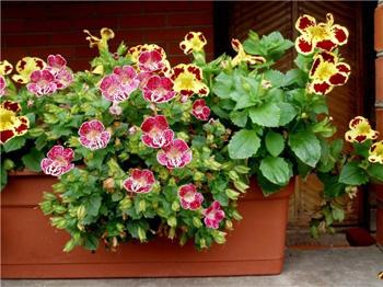 Торф нейтральный для цветов и растений