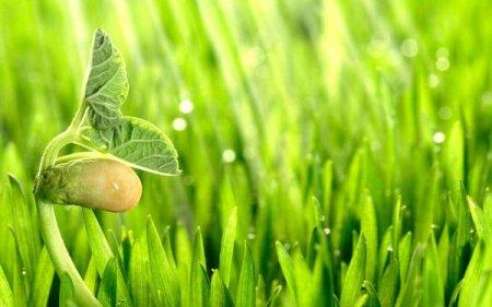 Действие стимуляторов роста на флору